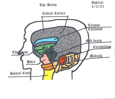 The_brain_picture