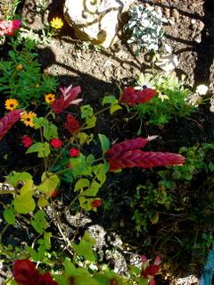 Flowerspalmtree