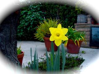 Daffodil2807