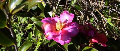Pink_flower_12108_2